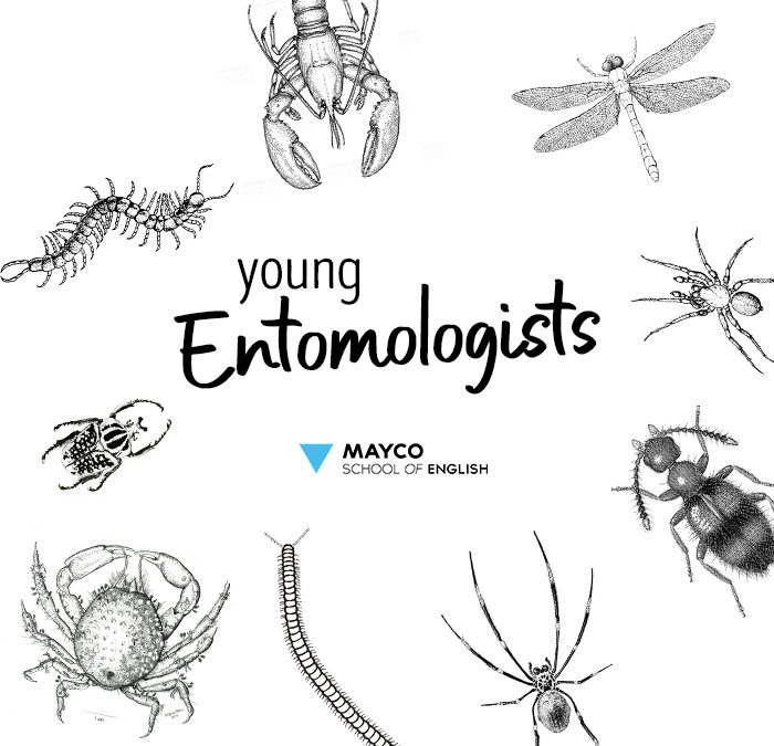 Young Entomologists